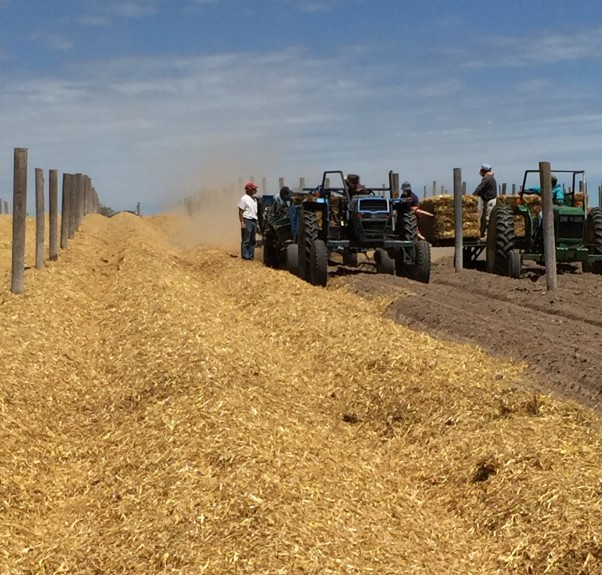 straw spreading